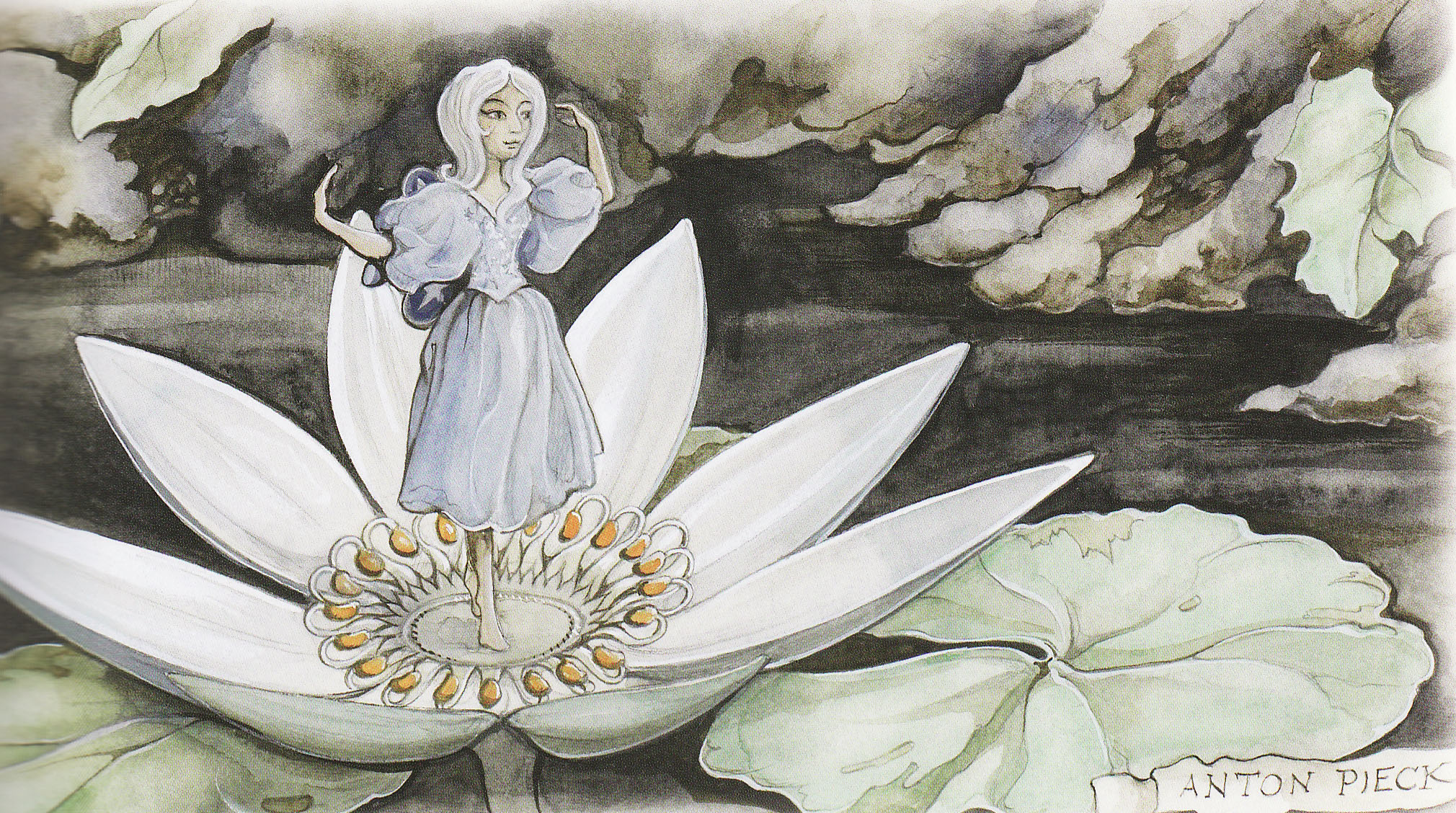 The indian water lilies